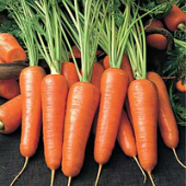 Морковь (46)